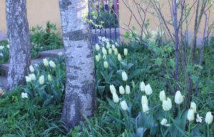 Vita trädg 2