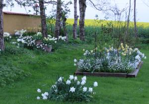 12.5 Vita trädgården