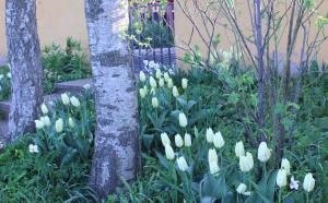 4.5 Vita trädgården I