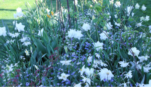 4.5 Vita trädgården II